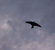 Swallow Silhoutte by kgb224