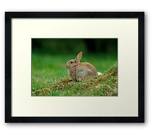 Rabbit Framed Print
