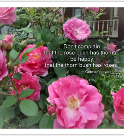 Rose Bush Happy Pink Roses German Proverb Sticker