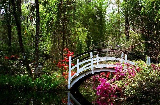 Magnolia Bridge No. 3, Charleston, SC by Benjamin Padgett