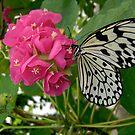 Paper Kite Butterfly by Ocean1111