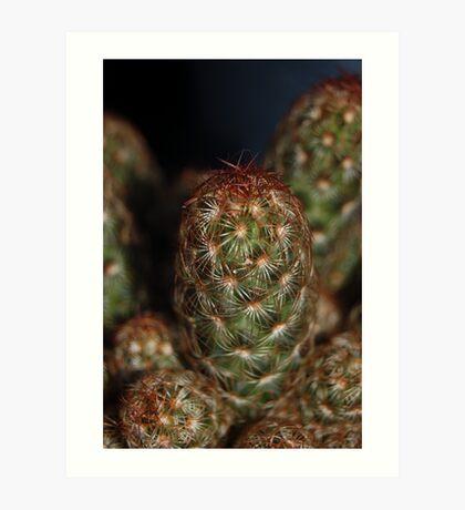 Cacti Macro. Art Print