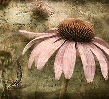Echinacea by Kelly Cavanaugh