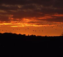 Birds in a Fire Sky by CFoley