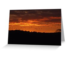 Birds in a Fire Sky Greeting Card