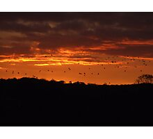 Birds in a Fire Sky Photographic Print