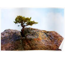 Lone Tree Rocky Mountains Poster