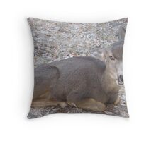 Doe a deer..... Throw Pillow