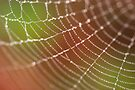 Conflicting lines or the World Wide Web? by Vikram Franklin