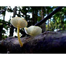 Yellow mushrooms Photographic Print