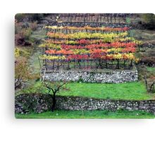 Vineyard in the southern Dolomites Canvas Print