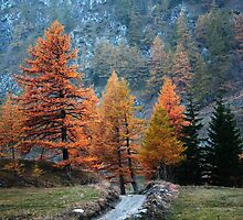 Fall trees  by Stefano  De Rosa