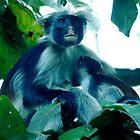 Darwin Madonna - Jozani Forest, Zanzibar (Tanzania)  by Gorper