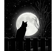 Moon Bath II, cat full moon winter night Photographic Print