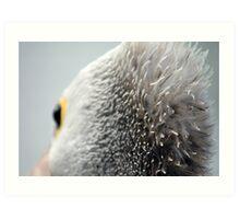 Hair Brained Pelican Art Print