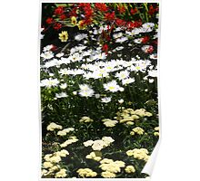 Mixed Cottage Garden Flowers Poster