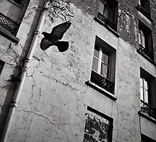 Flyin' Home - Clichy, France - 2009 by Nicolas Perriault