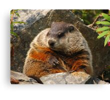 Groundhog Day Canvas Print