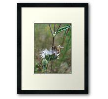 Honeybee in Elephant's Foot Framed Print