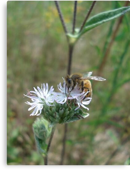 Honeybee in Elephant's Foot by May Lattanzio