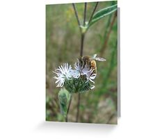 Honeybee in Elephant's Foot Greeting Card
