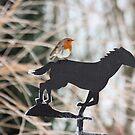 Winter Robin by Pamela Jayne Smith