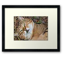 Visiting ham Framed Print