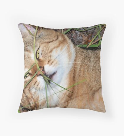 Visiting ham Throw Pillow