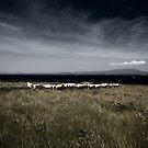 cow landscape by staz