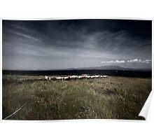 cow landscape Poster