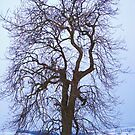 The Snow Tree by Goldenspirit