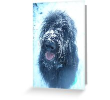 Blue with the cold Greeting Card