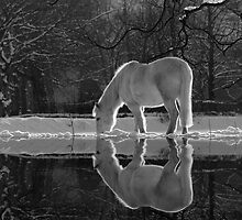 Winter Reflections by DianeRocks