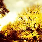 The winter in Canberra  by Kornrawiee