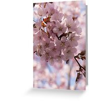 Pink Spring - Gently Pink Cherry Blossoms Greeting Card