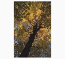 Under the Golden Autumn Canopy Kids Clothes
