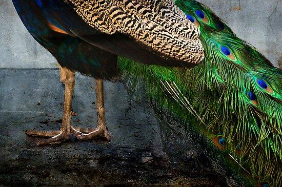 Peacock Feet by Kevin Bergen