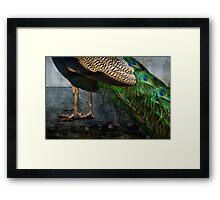 Peacock Feet Framed Print
