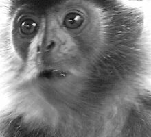 Silver Leaf Monkey 2 of 2 by justineb