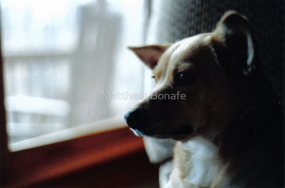 Rosie Looking through the Window by Matthew Bonafe
