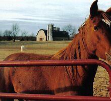 Red Horse by Matthew Bonafe