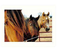The Three Horses Art Print