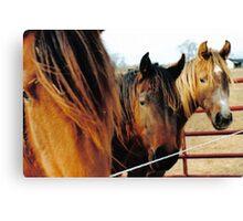 The Three Horses Canvas Print