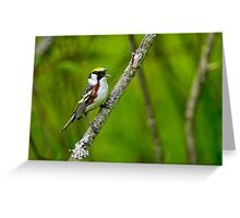 Chestnut sided Warbler - Ottawa, Ontario Greeting Card