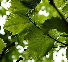 Green Summer Rain with Grape Leaves - Vertical by Georgia Mizuleva