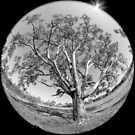 Around the Tree by Pauline Tims