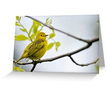 Female Yellow Warbler -  Ottawa, Ontario Greeting Card
