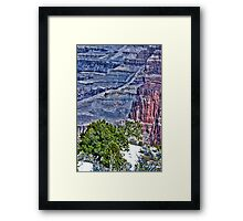 Canyon Trees - Pseudo HDR Framed Print