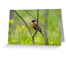 Male Robin - Ottawa, Ontario Greeting Card