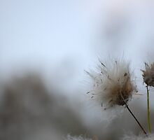 fluffy stuff by allisondegeorge